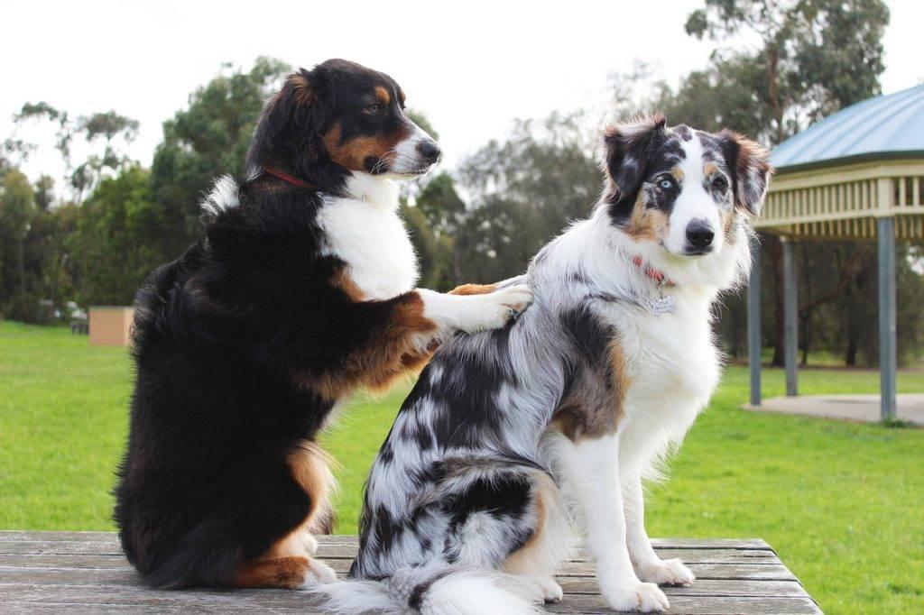 Thaimassage für Hunde